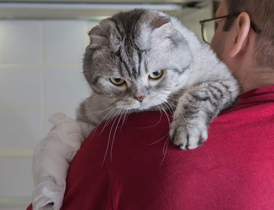 Man in red shirt holding a cat with a bandaged paw over his shoulder