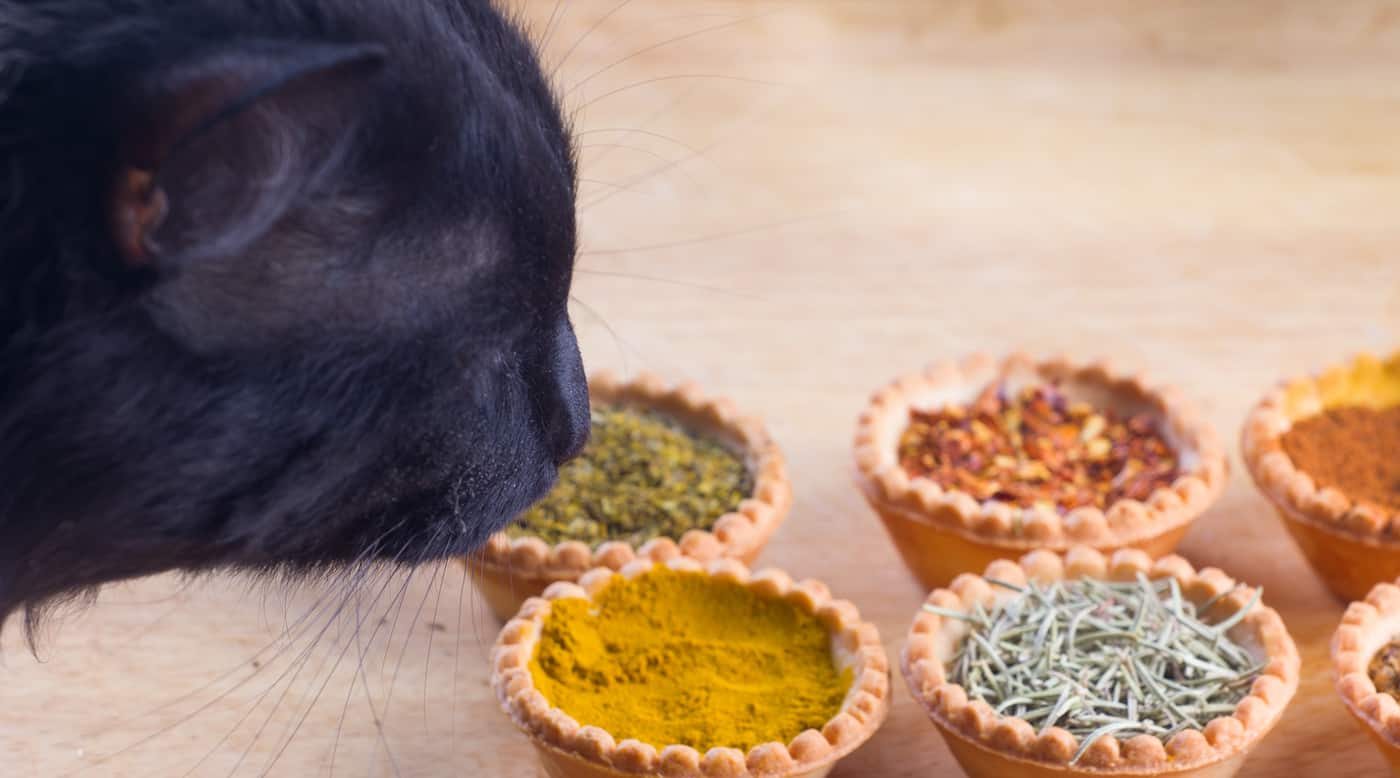 Black cat sniffing bowls of spices on table.