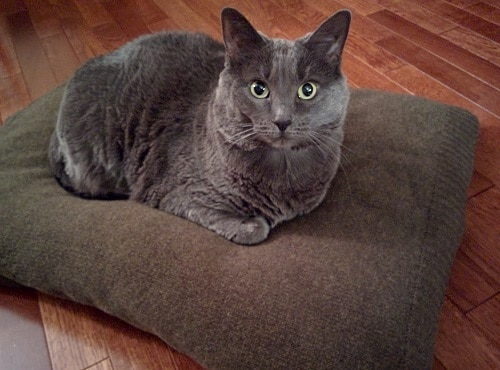 Diy Cat Bed Ideas Simple Cool Hills Pet