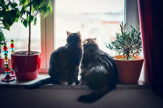 Two cats sits on window sill looking out with plants on boths sides of them