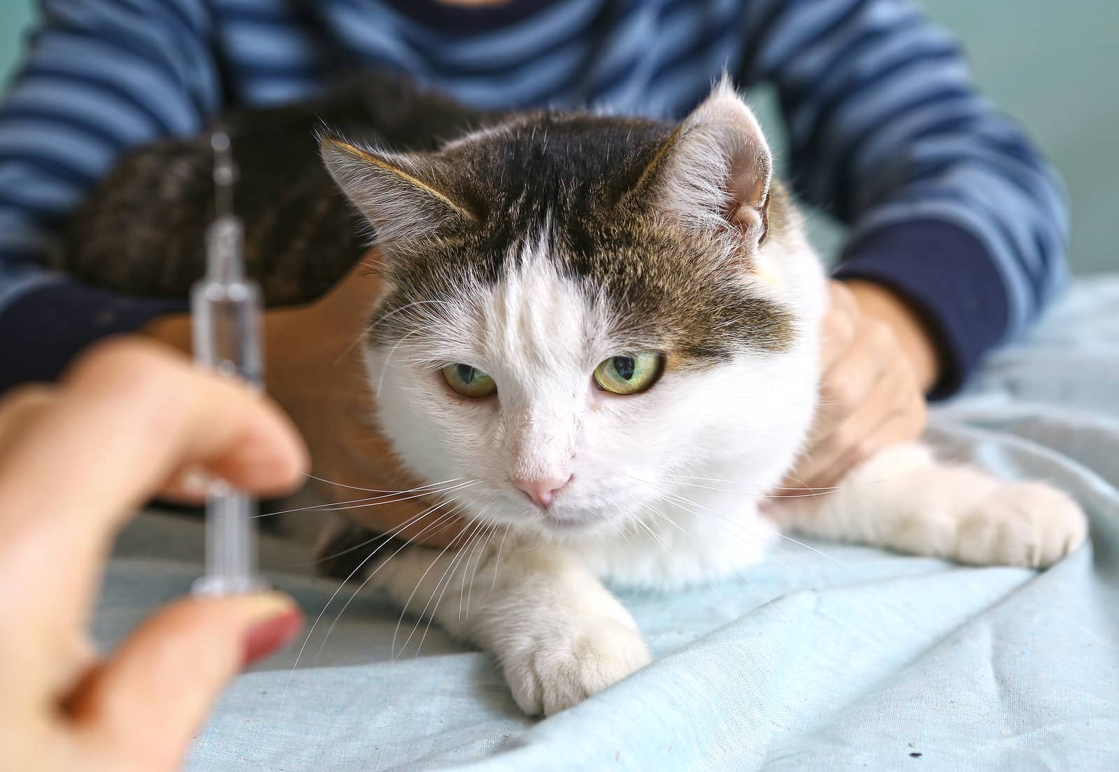Veterinarian hand with syringe and cat close up photo