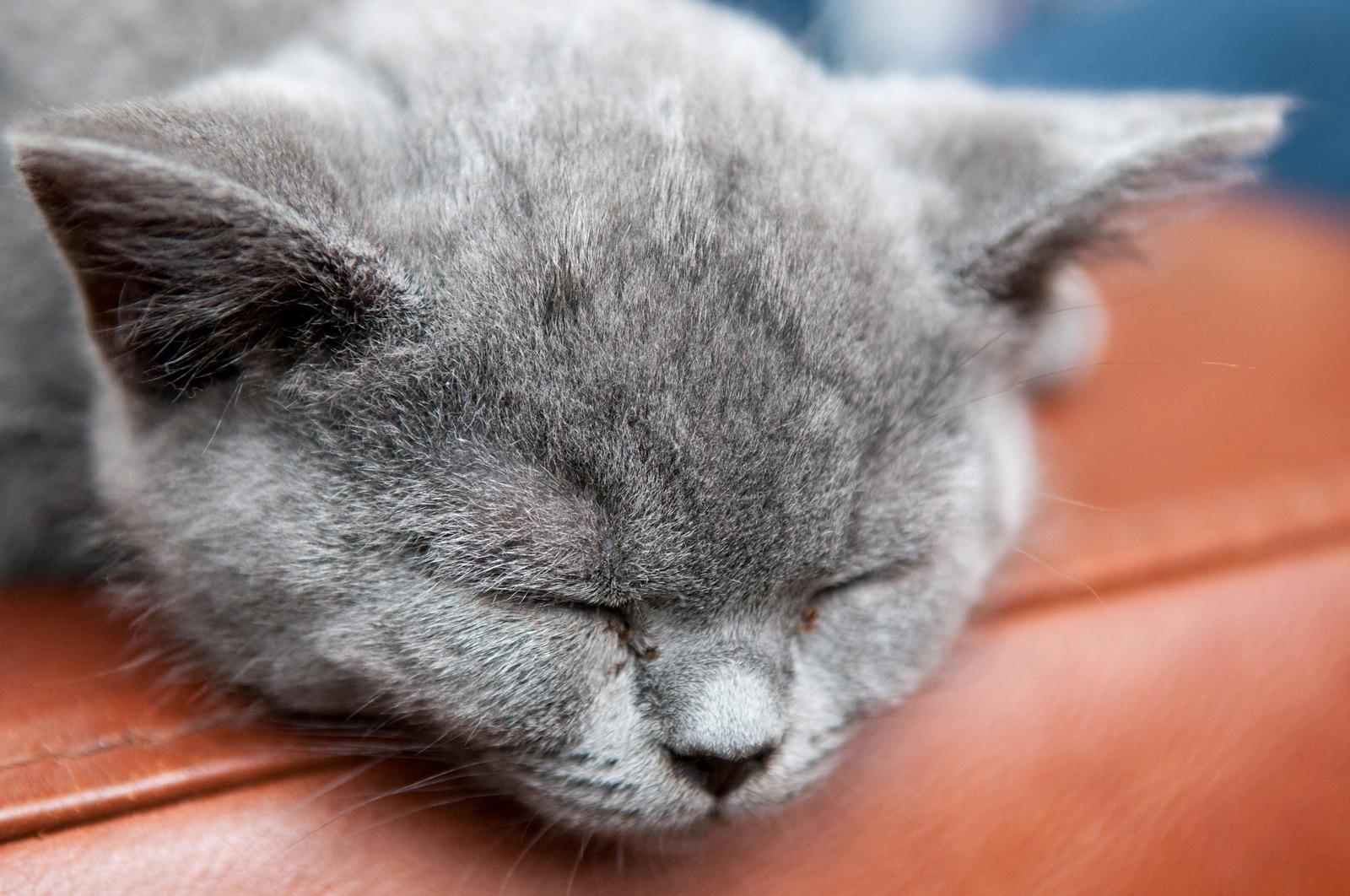 Cat Poop: What Should it Look Like? | Hill's Pet