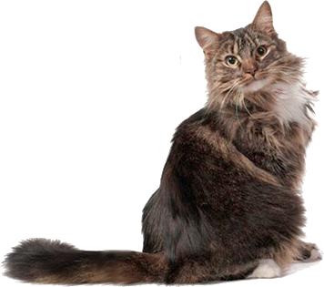 tom cat catheter