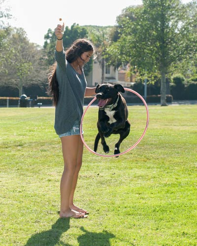 Labrador mix dog jumping through hula hoop that girl in gray sweater holds  up. - How To Make A DIY Dog Obstacle Course At Home Hill's Pet
