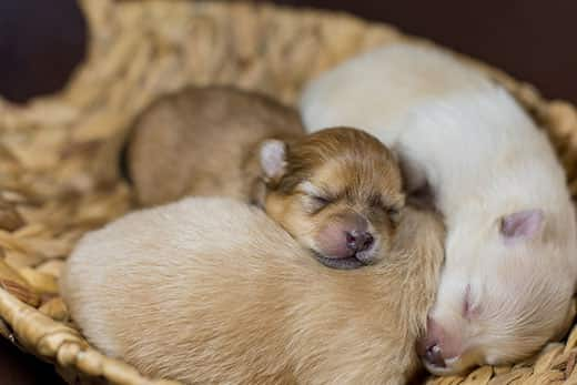 What to Feed Newborn Puppies
