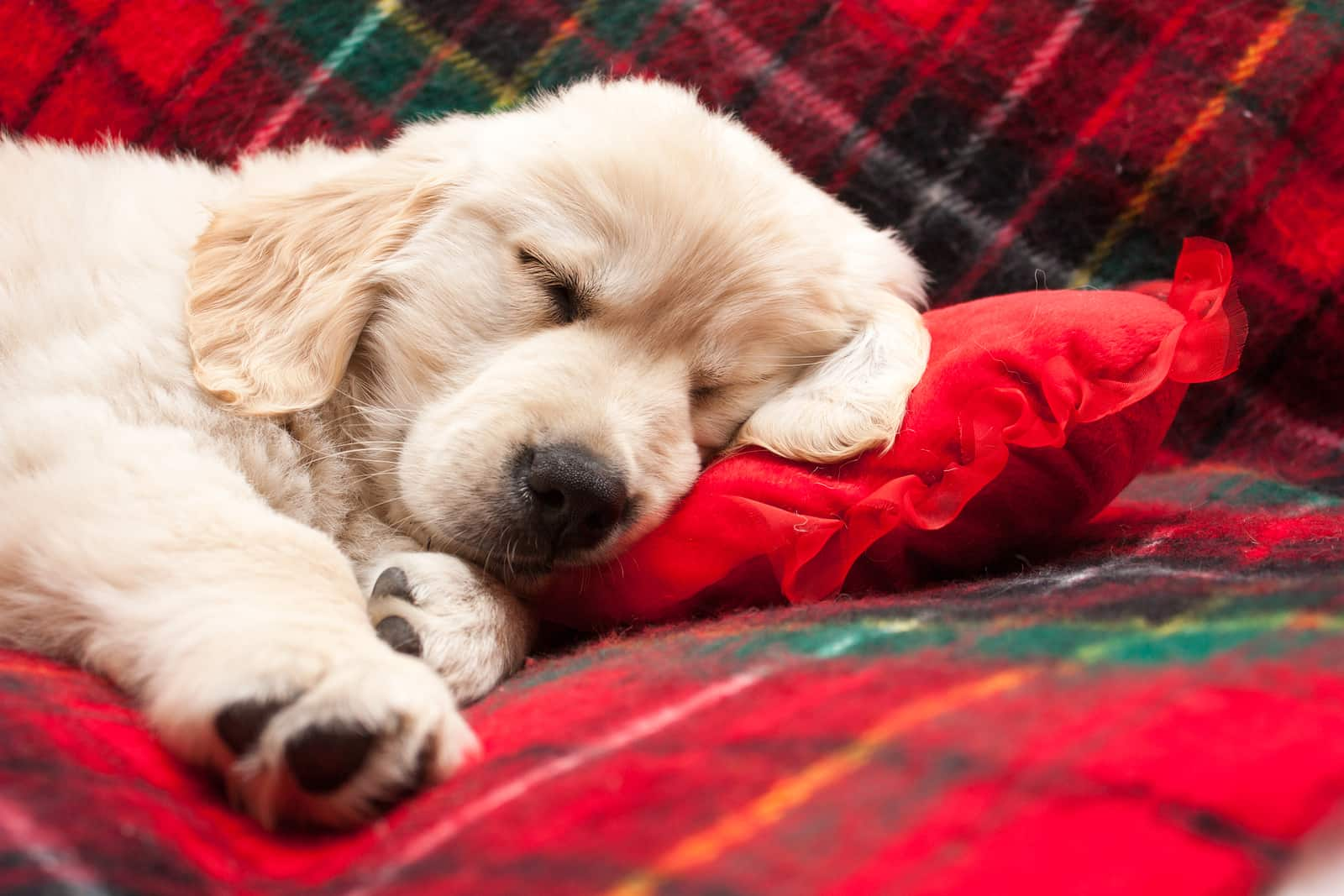 How Much Should My Dog Sleep Per Day? | Hill's Pet