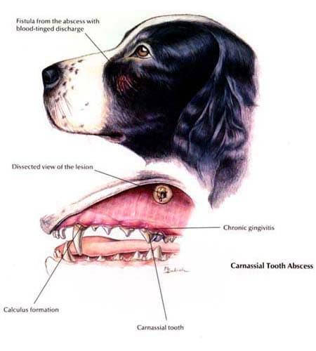 Ideal Balance Dog Food >> Dog Diseases - Dental Disease | Hill's Pet