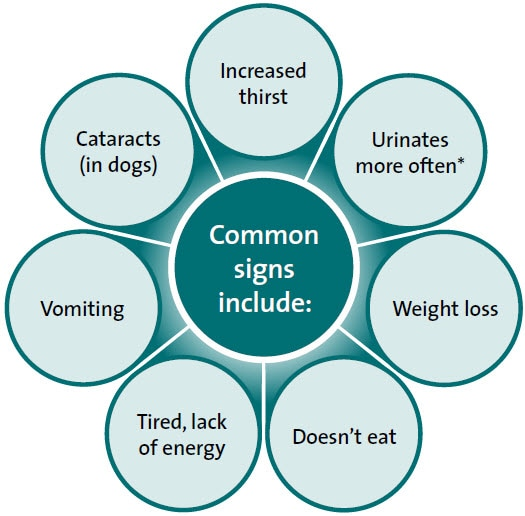 Type  Diabetes In Dogs