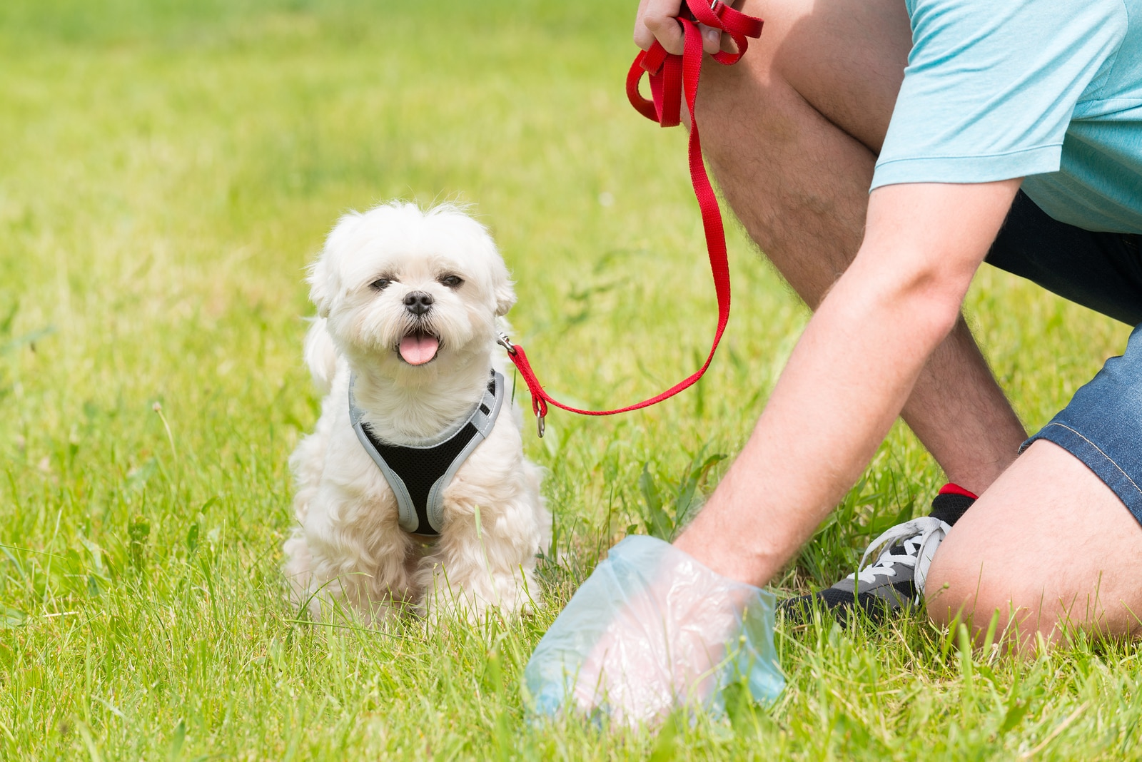 Is My Dog's Poop Abnormal? | Hill's Pet