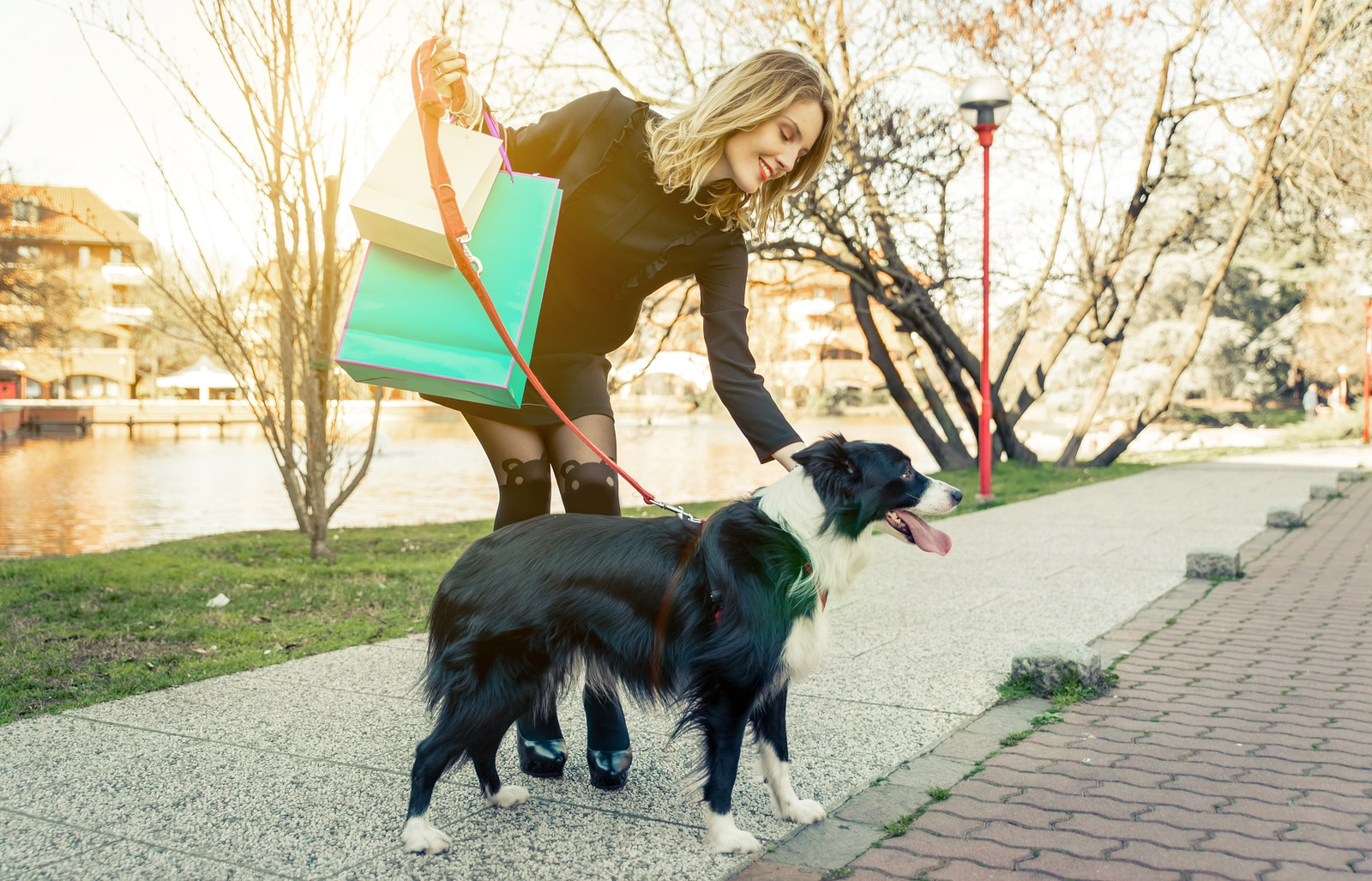 Woman holding shopping bags walking a border collie on a red leash.