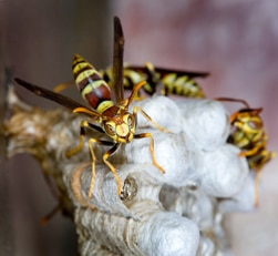 What to Do When a Wasp or Bee Stings Your Dog | Hill's Pet