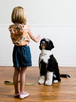 Ideal Balance Dog Food >> Helpful Command Training Tips for Puppy Owners | Hill's Pet