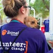 The Animal Foundation volunteer holding a dog during Clear the Shelters Day