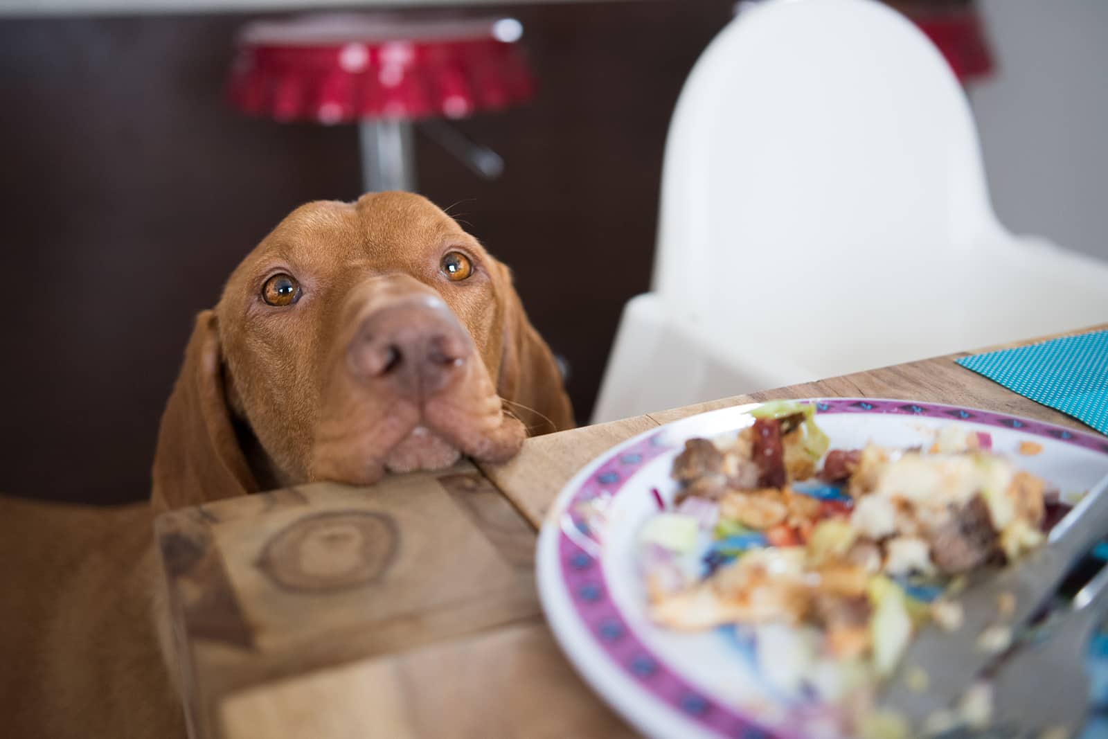 Dog's head placed on dinner table staring at human's food.