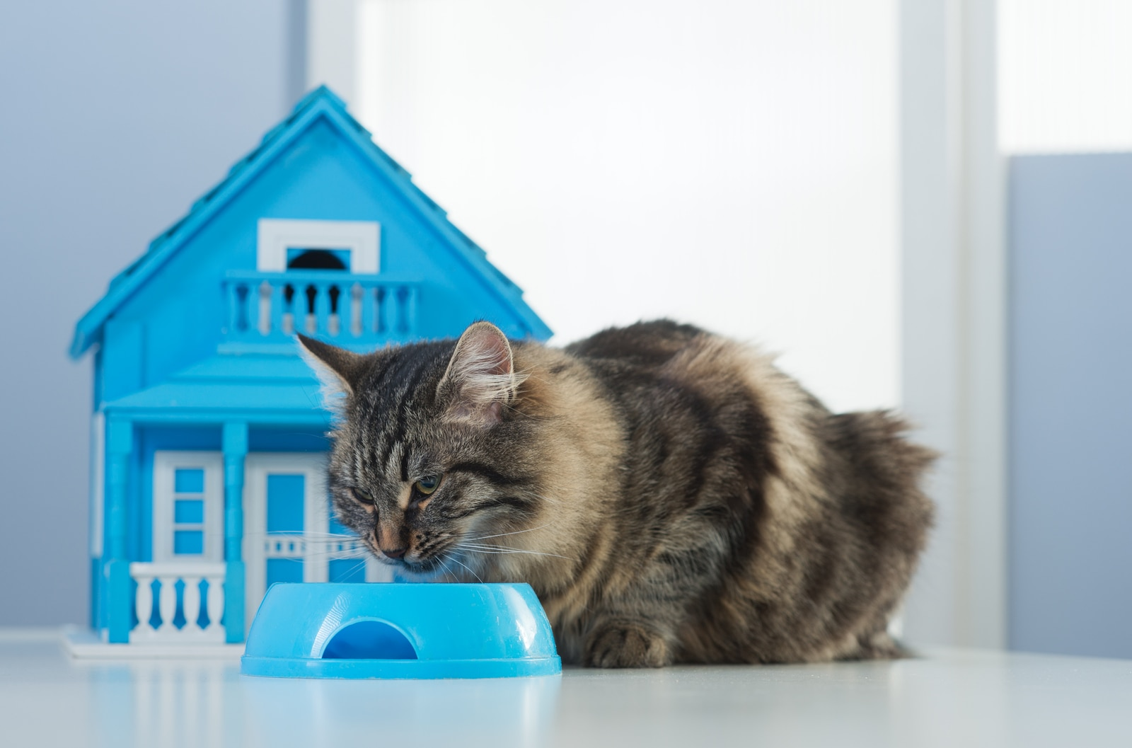 Cat eating in a bowl in front of a toy model house.