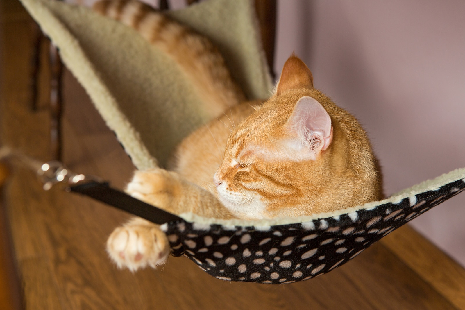 Orange tabby lying in black and pink patterned cat hammock.