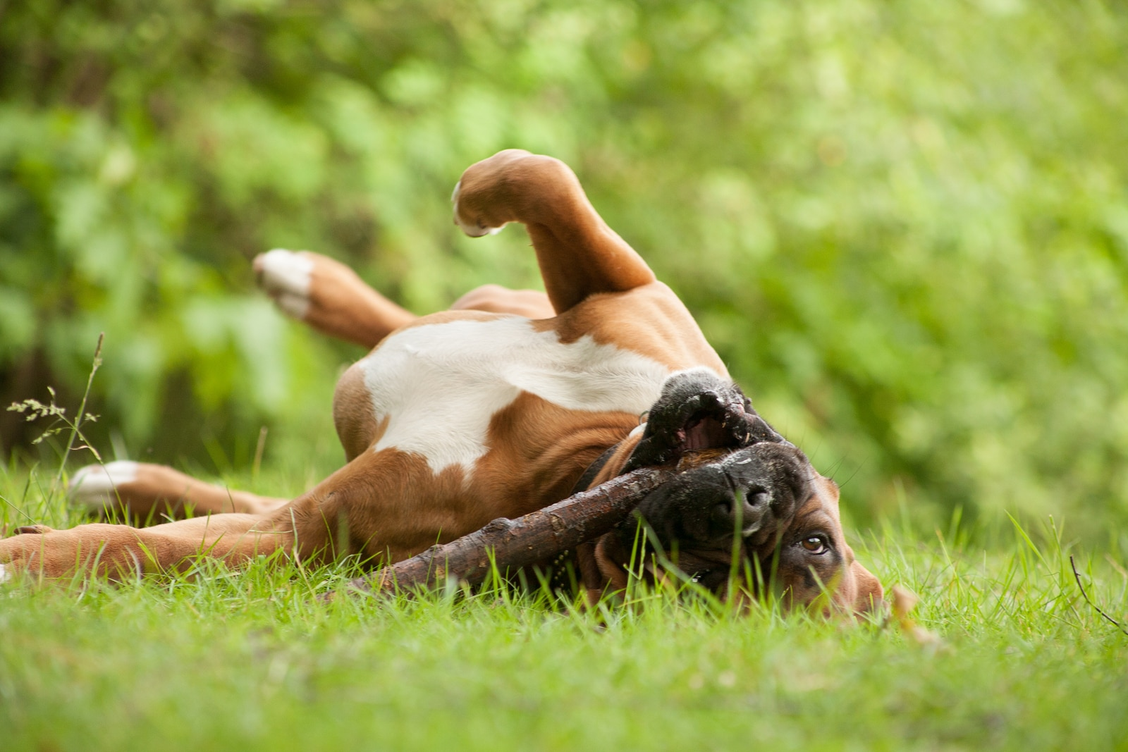 Flea and Tick Medications: Oral vs  Topical Treatments
