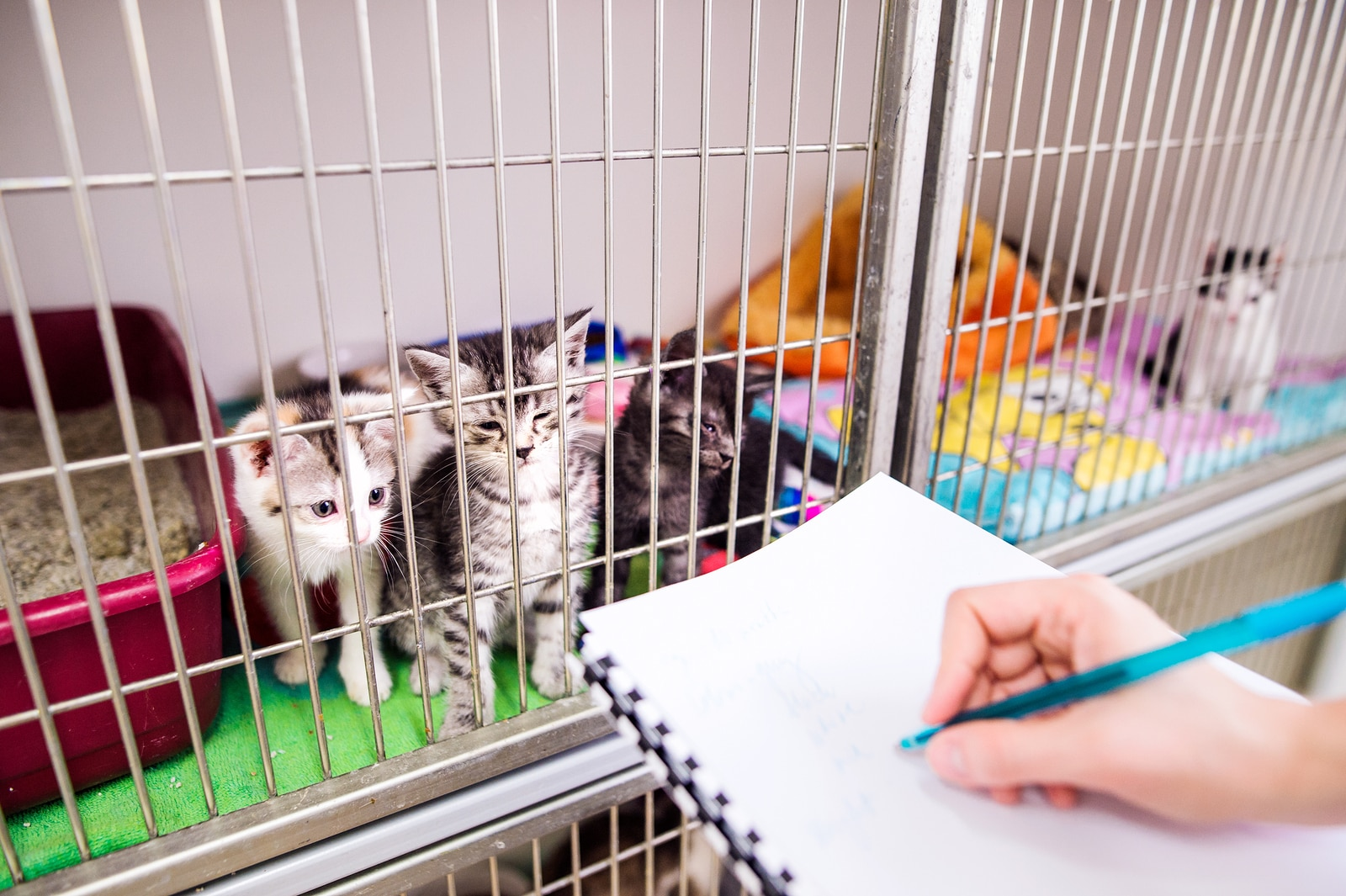 Veterinarian writing into a notepad about health of cats in cage.