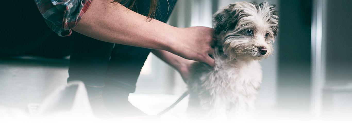 Train your pets with vaporub