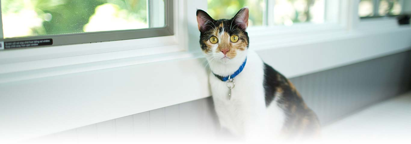 Why Cats Won't Use the Litter Box | Hill's Pet