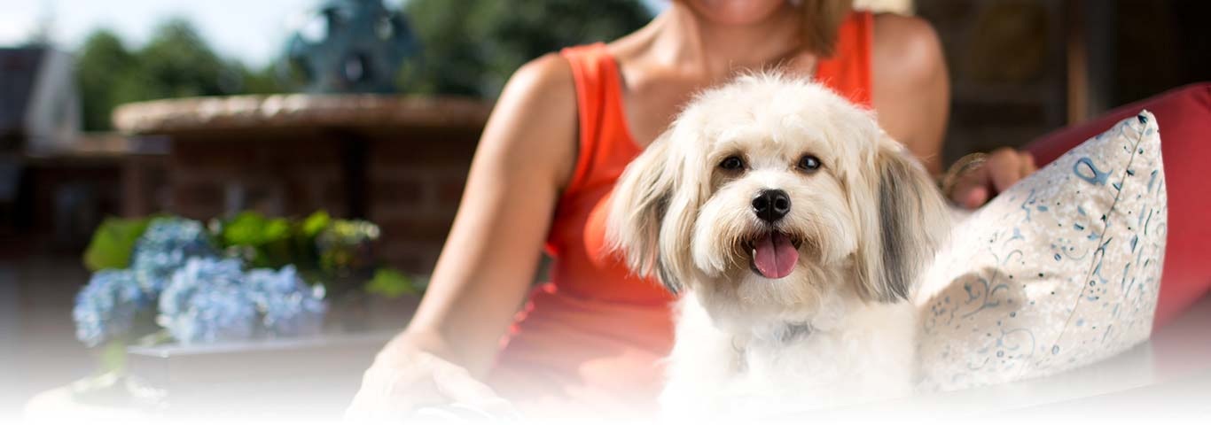 Shih Tzu Dog Breed Facts And Personality Traits Hills Pet