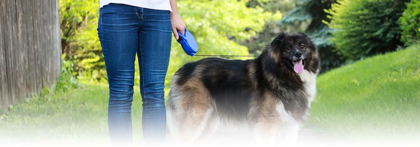 Understanding Pulmonary Hypertension in Dogs | Hill's Pet