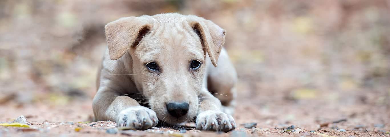 Dog Behavior Appearance Hill S Pet