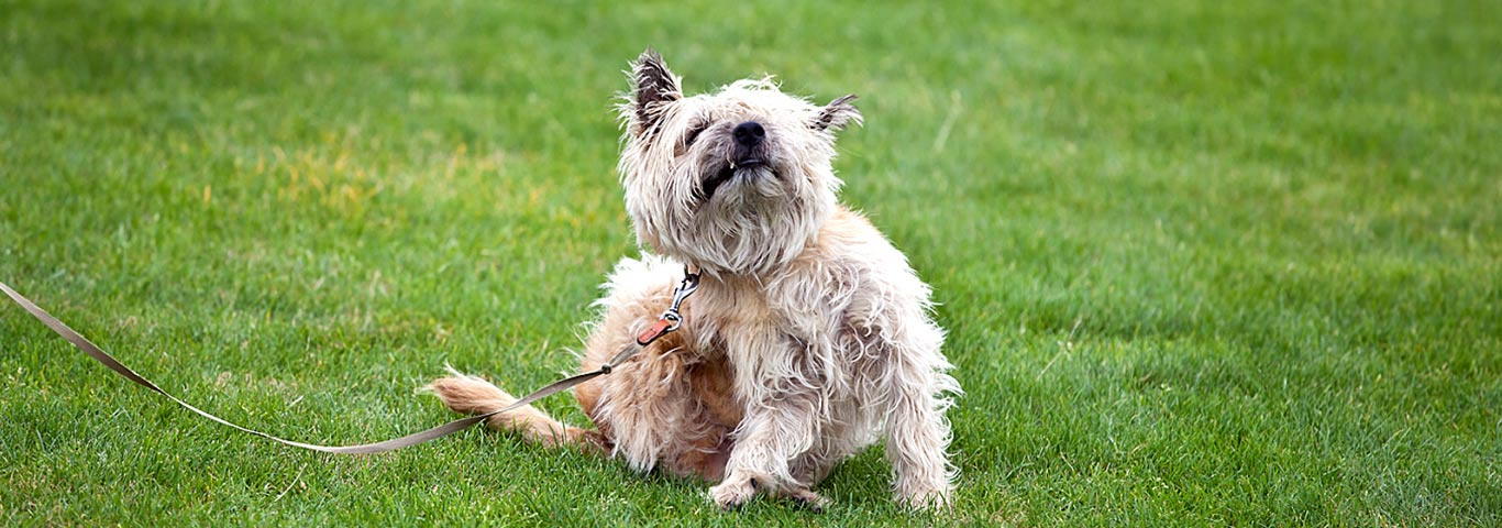 Dog Skin Conditions: 5 Common Causes | Hill's Pet