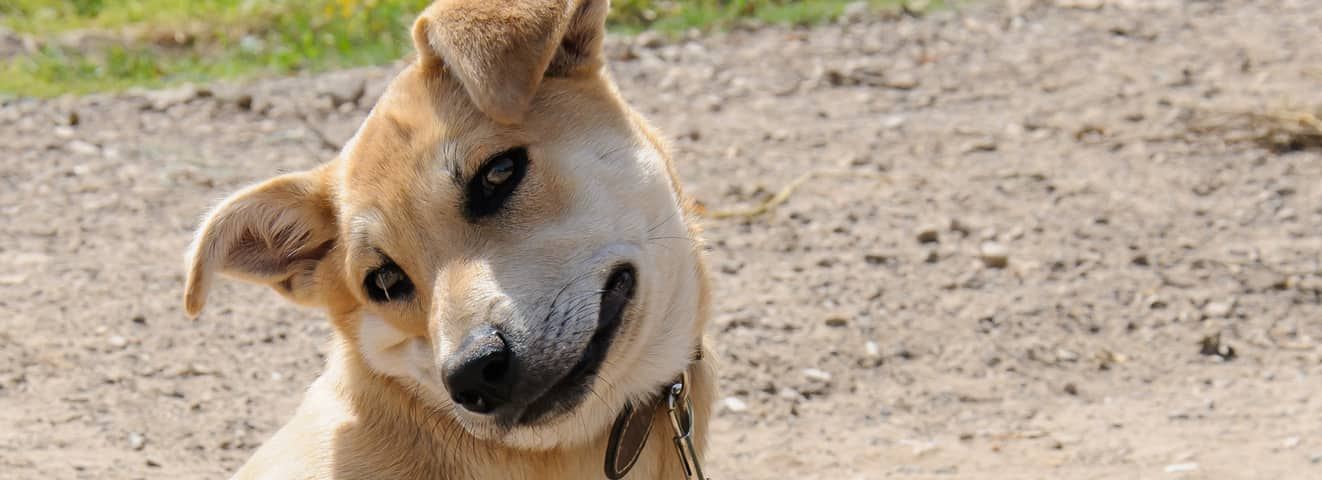 Common Bug Bites on Dogs: Signs, Prevention and Treatment