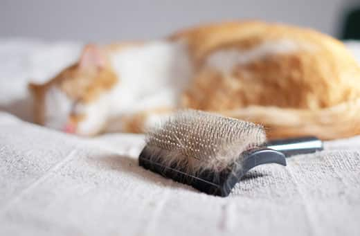 Brush full of pet fur and lying cat in the background