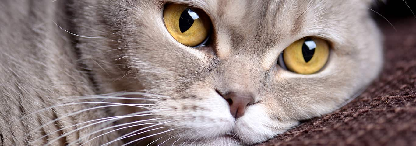Worms In Cats Symptoms