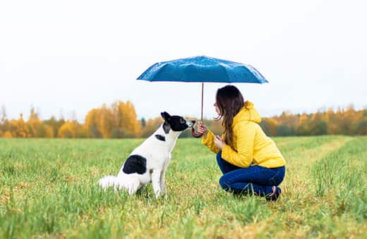 A woman in a yellow rain coat with her dog sitting under a large umbrella in the rain.