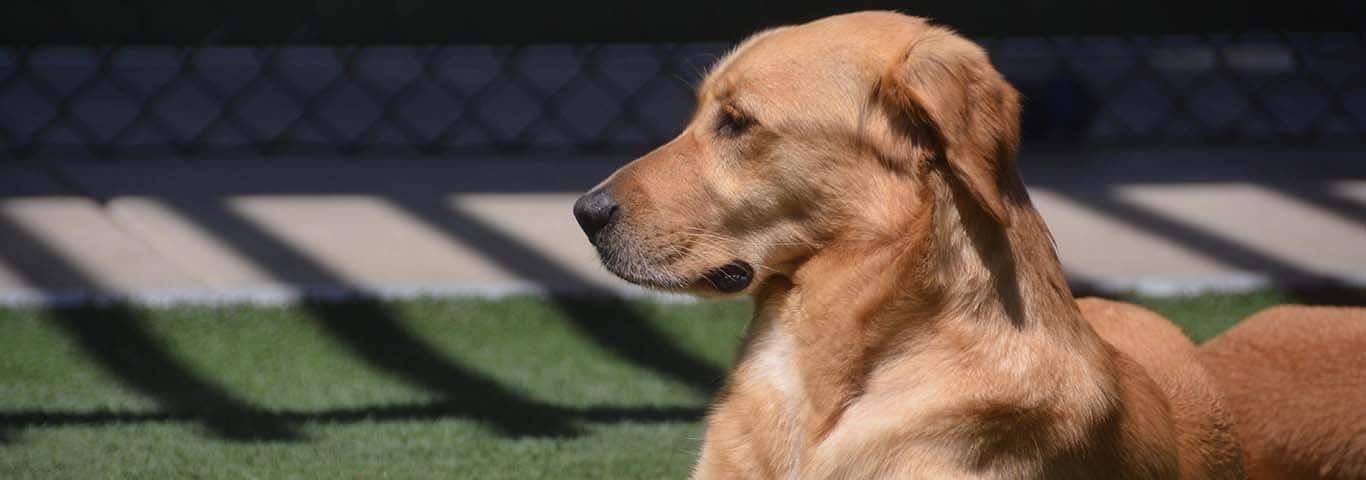 Dog Diseases Allergic Dermatitis Hill S Pet