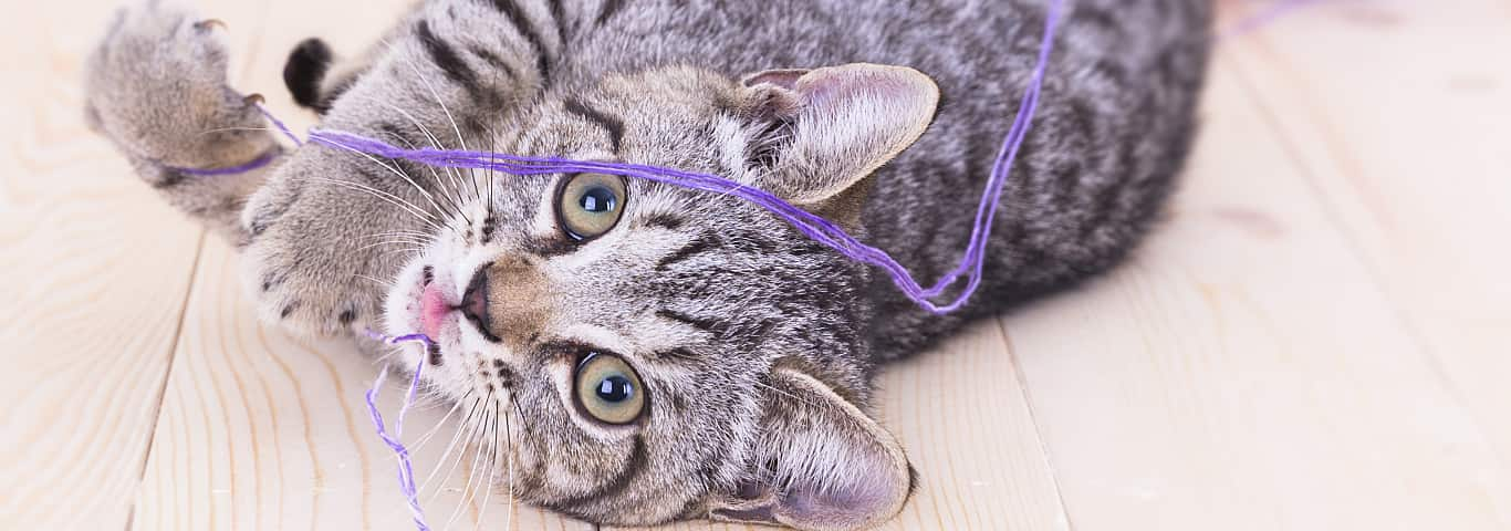 All About Giardia in Cats