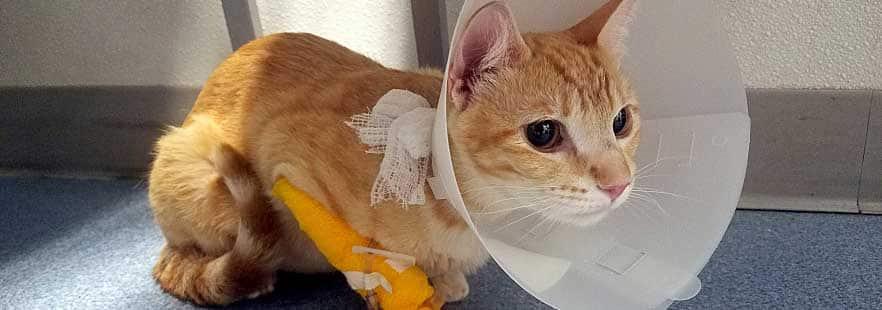 Polisi Lempar Anak Kucing Kedalam Parit Ditangkap