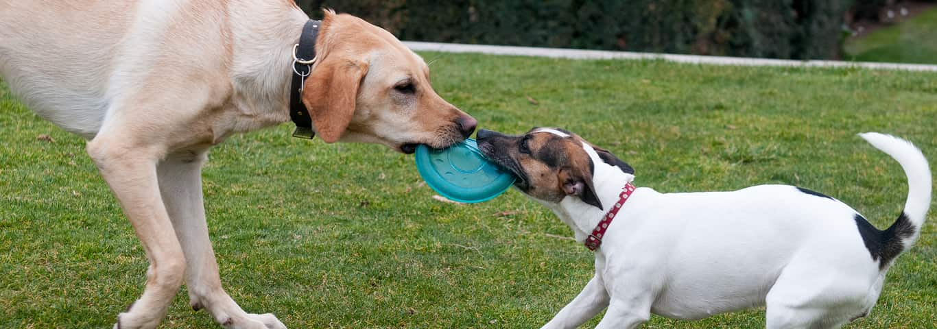 """With the World's First """"Smart Ball,"""" Play with Pets from ...  