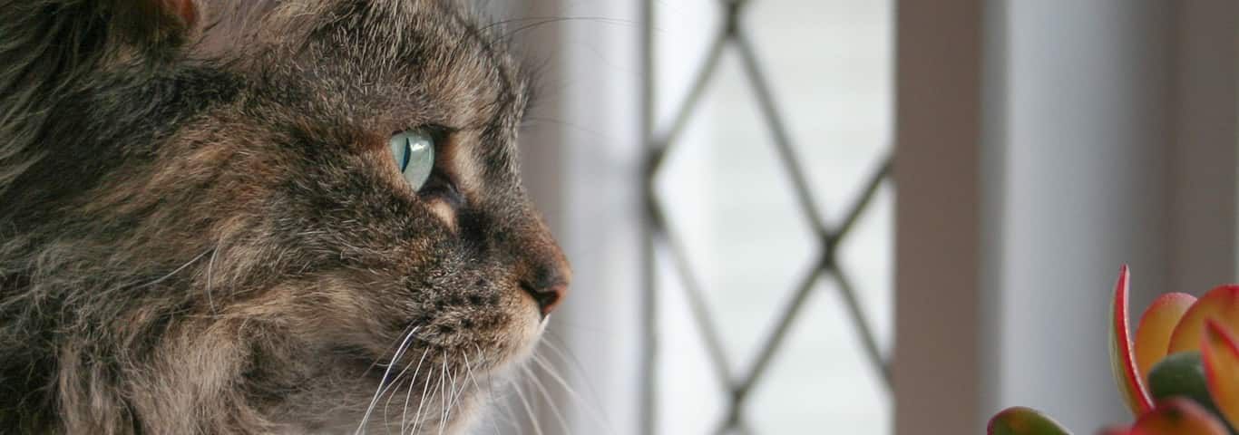 Tips For Choosing Cats Best Suited Apartment Living Including What Types Of Es Are Certain Breeds