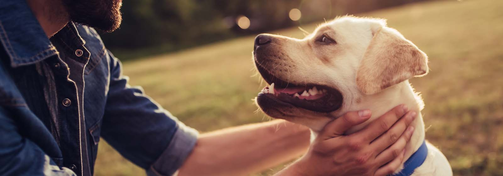 Cancer in Dogs: Types, Symptoms & Treatment   Hill's Pet