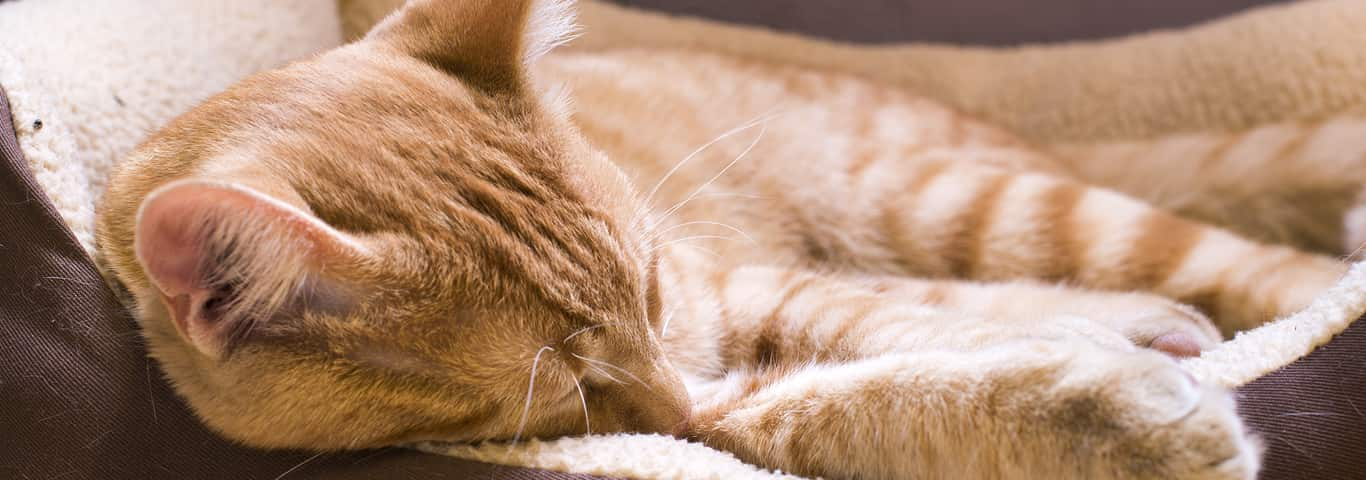 How to Get Rid of Cat Odors for Good!   Hill's Pet