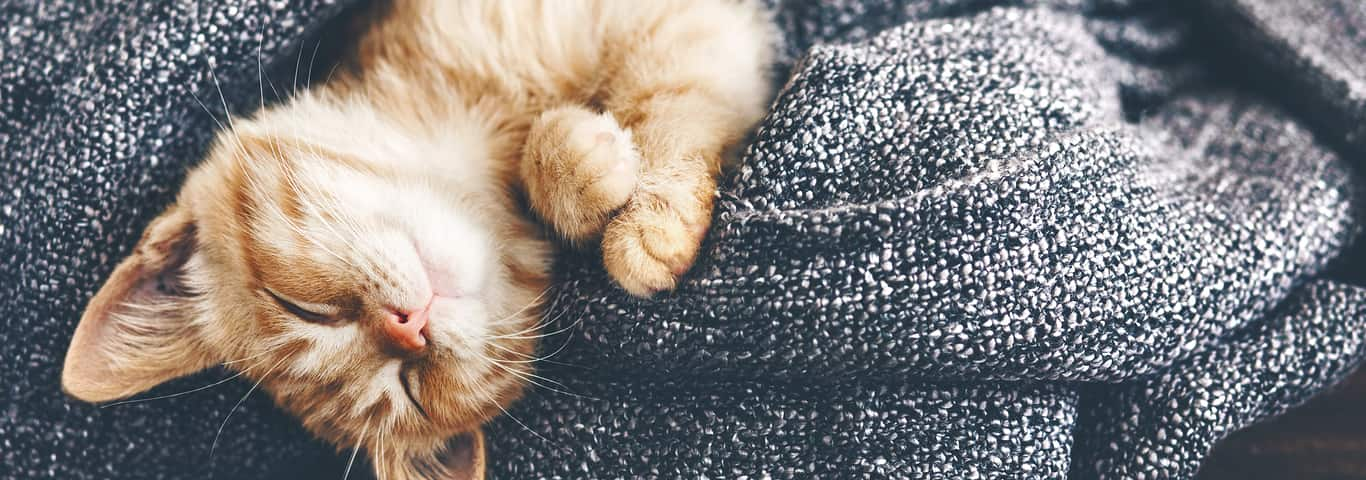Bringing Home A Kitten: Things You Need to Know | Hill's Pet