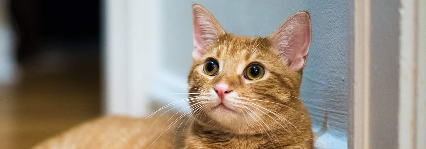 Dog and Cat Care Articles | Hill's Pet