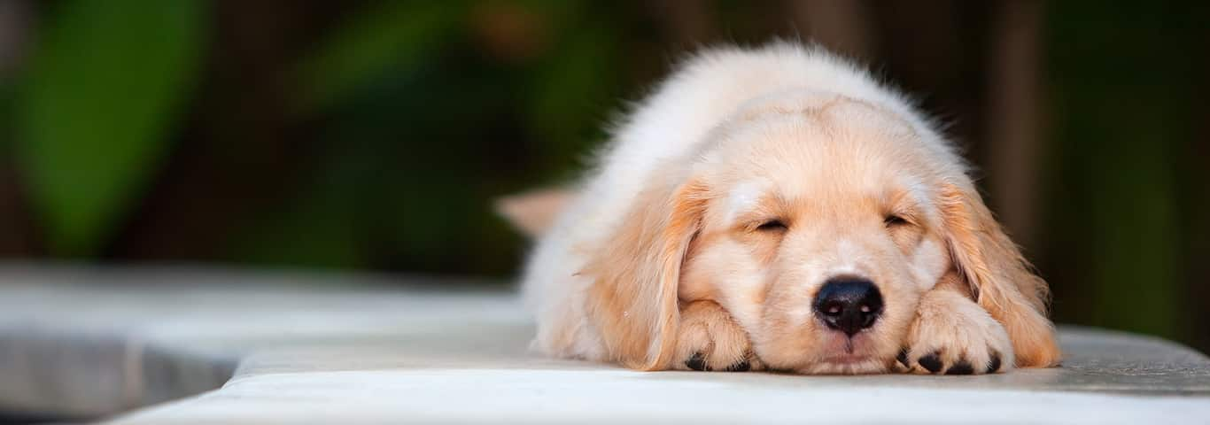 When Can Puppies Go Outside? | Hill's Pet