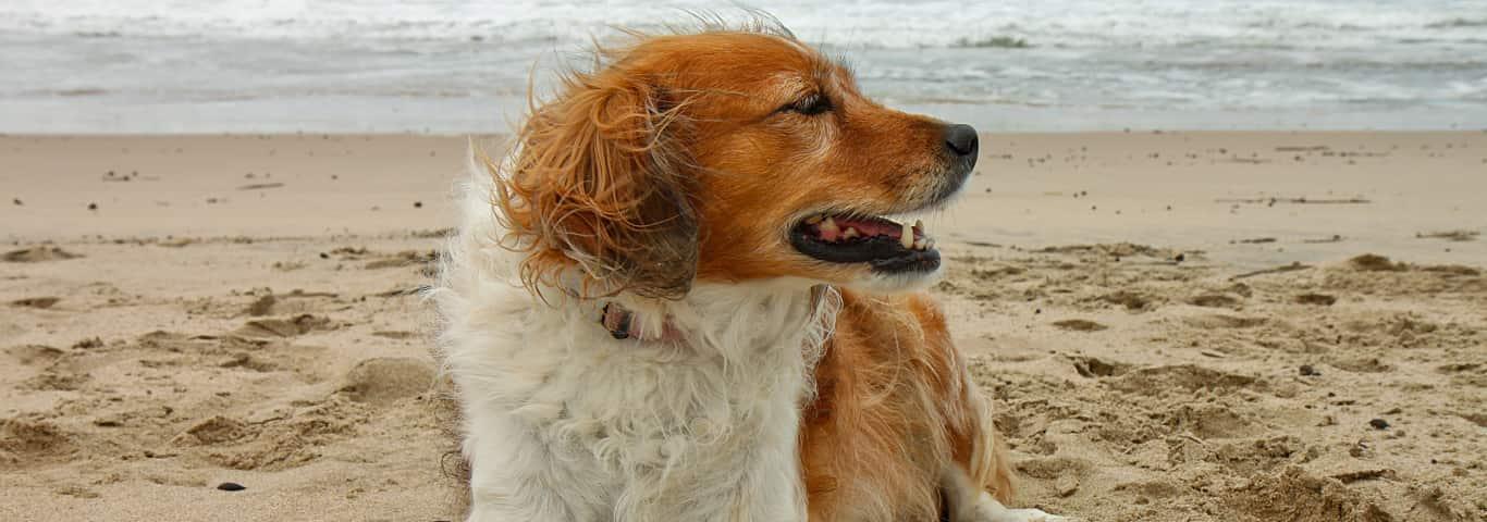 Squishy lump on dog