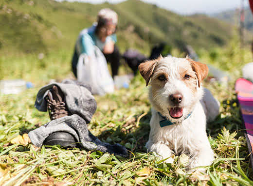 Scruffy looking dog lying in mountain grass with campsite blurred in background