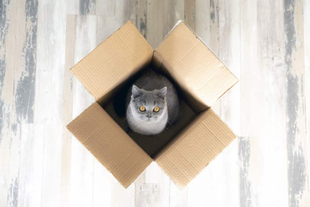 Cardboard box with a cat inside — view from up above.
