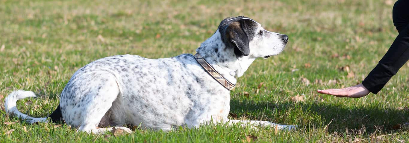 Dog Intelligence: Give Your Pup an IQ Test | Hill's Pet