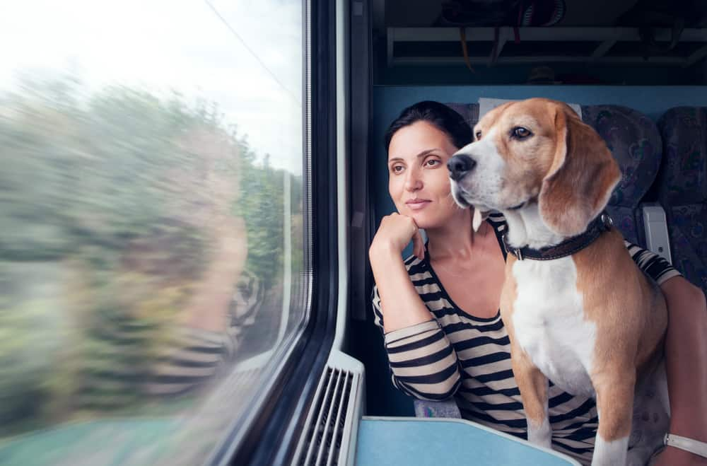 Woman with a beagle on her lap stair out a moving train window.
