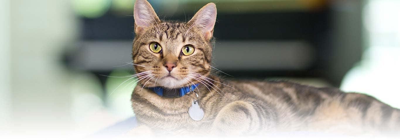 bladder disease in male cats