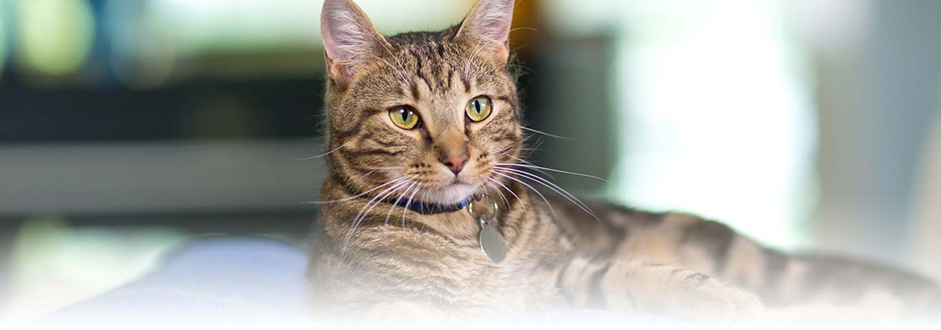 Best Cat Food For Senior Cats With Kidney Disease
