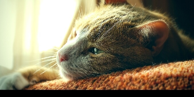 Cat Anxiety: Understanding Your Stressed Cat | Hill's Pet